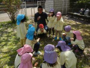 新しい3歳が加わった異年齢児クラスのみんなで、春さがしの散歩へ出かけてみました。 つくし、桜の花びら等、かわいい春をたくさん見つけられました